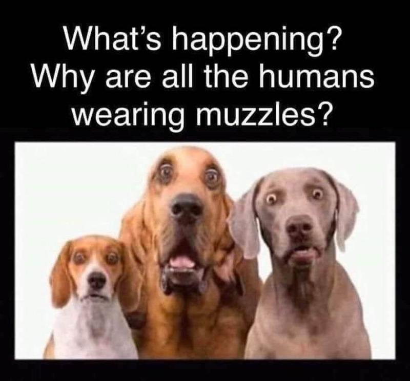 dogs-are-wondering.jpg