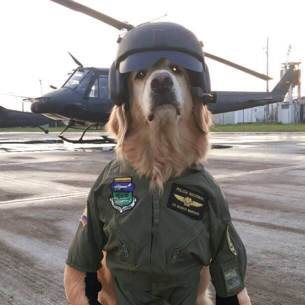 a297974037c3eb08fbbfedf11fd6bffd--funny-dogs-helicopter.jpg