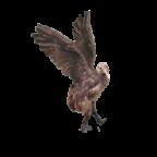 Airborne Kiwi's Avatar
