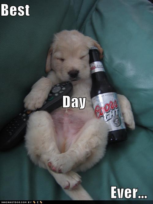 BEST-DAY-EVER-dogs-25606689-500-667.jpg