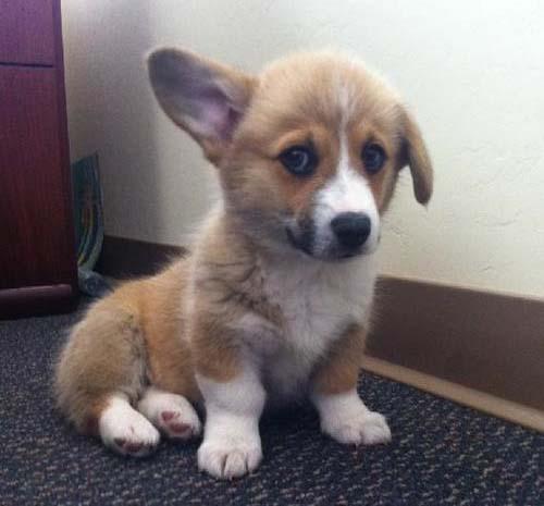 cutie-pup.jpg