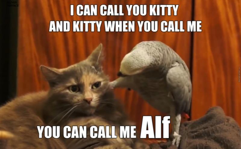 bird-vs-cat-8_o_4846027.jpg