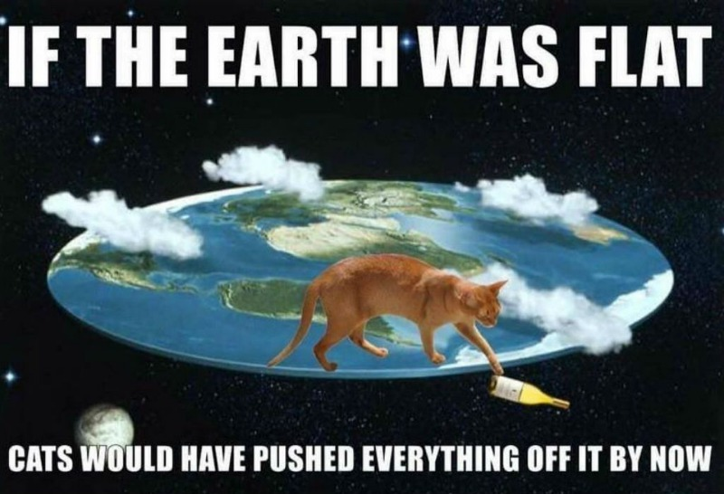 cat-meme-61.jpg
