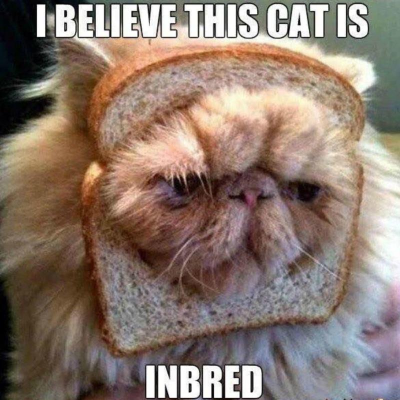 cat-meme-83-1024x1024.jpg