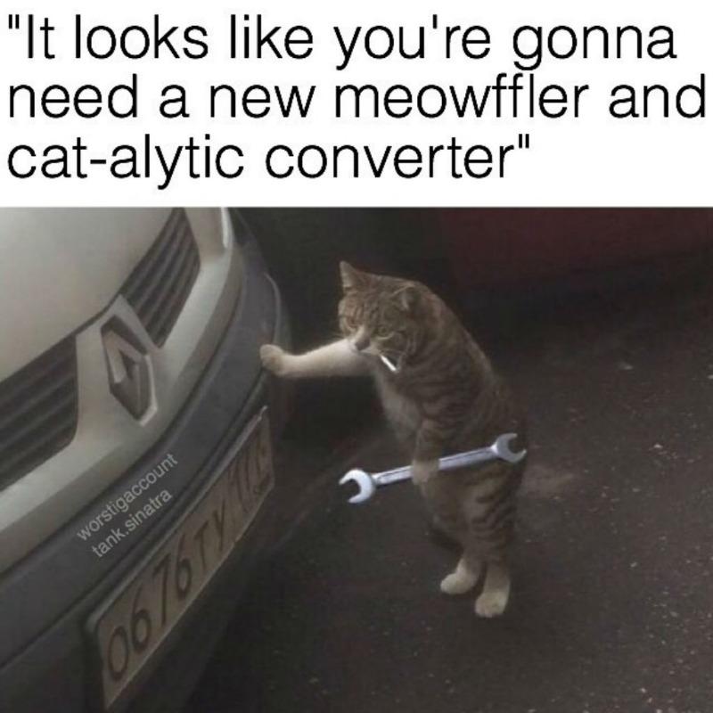 cat-meme-88.jpg