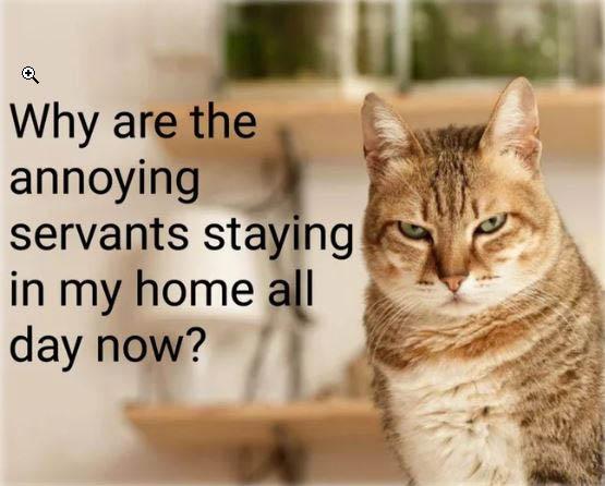catView.jpg