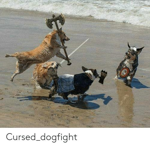 cursed-dogfight-47518321.jpg
