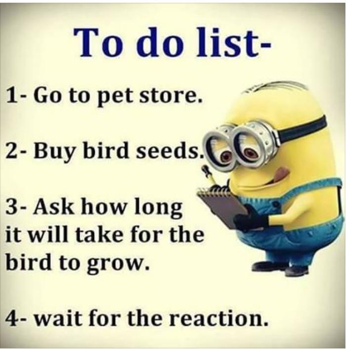 to-do-list-bird-seeds.jpg